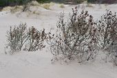 stock photo of quicksand  - Trees covered by sand from a shifting sand dune - JPG