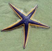 Beached sea star