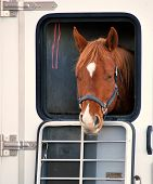 stock photo of breed horse  - Horse portrait in a transport trailer outside - JPG