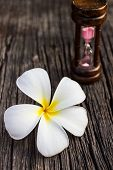 Plumeria Or Frangipanni Blossom On The Old Wood Background.