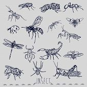 The insect marker sketch style hand drawing