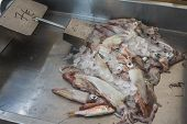 stock photo of kraken  - Fresh calamari in market on a Greek island Kalymnos