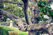 The Royal Palace Gardens, Aranjuez,community Of Madrid,spain,europe