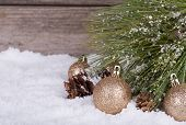 picture of pine-needle  - Gold Christmas balls with snowy pine tree needles - JPG