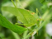 Macro of grasshopper.