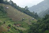 View to Doi Ang Khang Royal agricultural station in Chiang Mai province, Thailand.