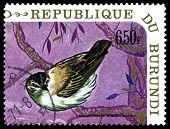 Vintage  Postage Stamp. Bird   Sedge Warbler.