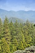 Sequoia National Monument