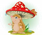 Hedgehog under Mushroom