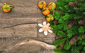 Mandarine Fruits And Christmas Tree Branches