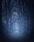 dark forest leading into the horizon.