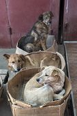 stock photo of stray dog  - roving stray dogs sleeping in cardboard boxes - JPG