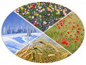 image of fall-wheat  - four seasons circle II  - JPG