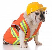 picture of working animal  - working dog  - JPG