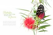 picture of butterfly flowers  - butterfly on a pink flower isolated on white background with copy space and sample text butterflies can - JPG