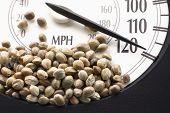 picture of seed bearing  - Car speedometer with hemp seeds on it in macro - JPG