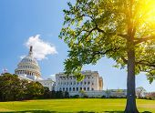 pic of capitol building  - US Capitol at sunny day - JPG