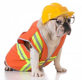 picture of working-dogs  - working dog  - JPG