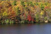 Autumn Color 3