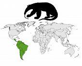 Giant Anteater Range