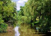 Árboles junto a un río