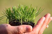 wächst Gras auf Seite