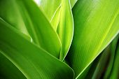 Close up green grass
