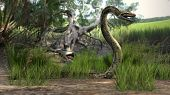 picture of green tree python  - amazon forest python - JPG