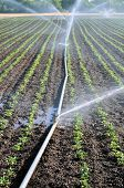 Water sprinkler on an agriculture field