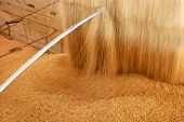 Closeup of soybean being poured from a storage warehouse into a truck