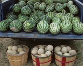 Watermellons And Cantalopes