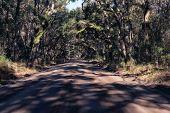 Trees Tunnel At Sunny Day, Botany Bay, South Carolina, Usa poster