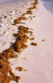 Sea grass.