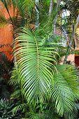 Palm branch.