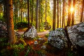 Enchanted woods in the morning sunlight. Fairytale forest in autumn. Location place Germany Alps, Eu poster