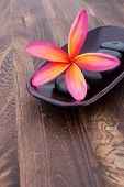 Tropical Plumeria Frangipani with spa stone on wooden table for spa and wellness concept with space