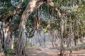 Dirt Track Trhough Jungle In Ranthambore National Park In Rajasthan, India poster