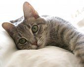 Gato preguiçoso