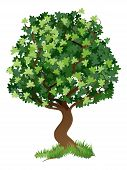Illustratie van de boom