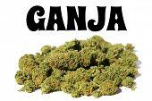 Ganja Marijuana. Close up of Cannabis Ganja. Prescription Medical and Recreational Dried Marijuana F poster