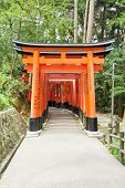 image of inari  - Famous shinto shrine of Fushimi Inari Taisha near Kyoto includes around 1300 orange torii gates - JPG