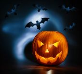 Picture of halloween holiday background, carved glowing pumpkin and black bat in dark night, jack-o-