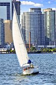 Sailboat In Toronto Harbor