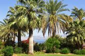 Israel,Sea of Galilee,  Mount of Beatitudes, gardens