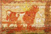 Bull Duram