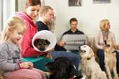 Busy Waiting Room In Veterinary Surgery