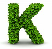 image of letter k  - Leaves alphabet font letter K on white background - JPG