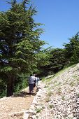 Walking Through Shouf Cedar Reserve, Lebanon