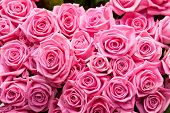 image of bunch roses  - pink natural roses background - JPG