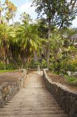 Entrar la selva Balboa Park California.